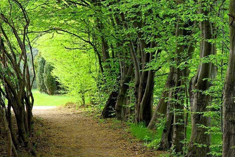 جشن ثبت جهانی جنگل های هیرکانی در 5 استان