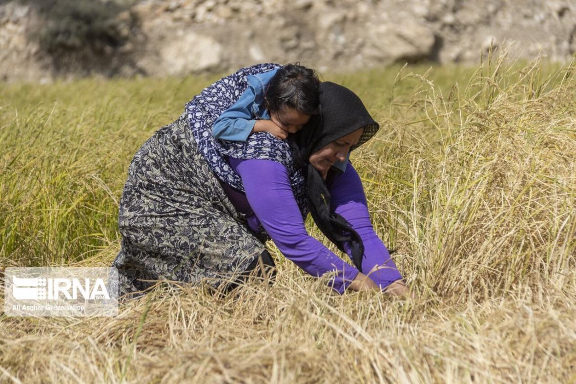 خبرنگاران بانک کشاورزی خراسان شمالی سه هزار و 721 میلیارد ریال تسهیلات داد